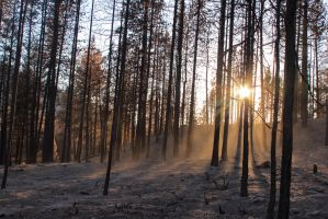 Charred forest 2 by JSAriadna