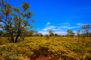 Field of Yellow...2 by midnightrider79