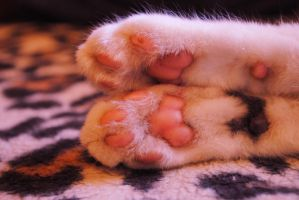 Cat paws . by Mariolka744