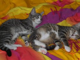 My two little Boys by Fachhillis