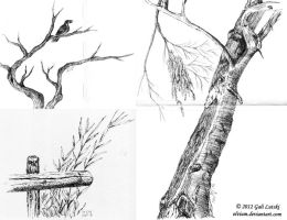 Sketches 2 - trees and plants by Olvium