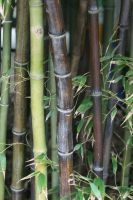 Bamboo2 by newdystock