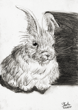 White rabbit 02 by SulaimanDoodle