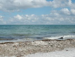 Captiva 043 by Peace-of-Art by Peace-of-Art