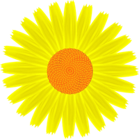 Daisy Yellow by clipartcotttage