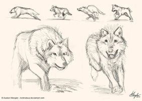 Dogs/wolves by AustenMengler