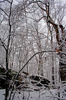 Winter Forest Stock 29 by AreteStock