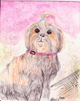 shih-tzu by PurpleWish23