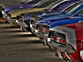 -.. E-Bodys ..- by AmericanMuscle