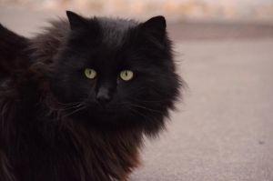 Black Cat 3 by Lakela