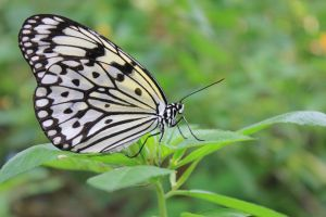 White 'N' Black Butterfly by afterfxpro