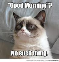 Grumpy Cat Meme 3 by jinxxnixx