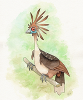 Hoatzin by WonderDookie