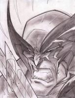 Wolverine Sketch Shot by StevenSanchez