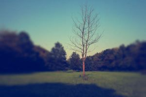 lonesomely by LeaHenning