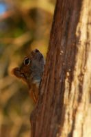 Squirrel, it's a squirrel... by FallingClockwise