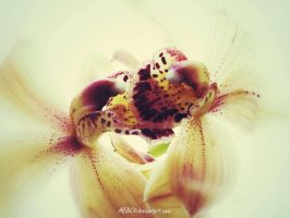 Orchid Duet edit.. by AlfiBOh