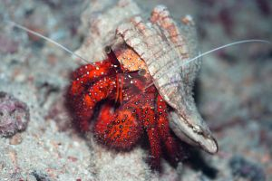 Crab in shell by MotHaiBaPhoto