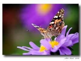 only Butterfly... by Westik