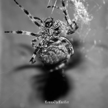 Spider IV by RemusTheLucifer