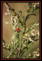 Little Miss Lady Bug by SassyPants61762