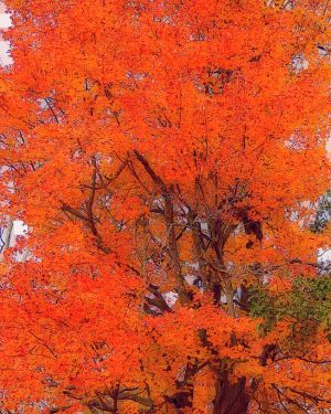 Shades of Autumn 2014.XIV by MadGardens