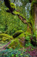 Fairy Tree Stock 3 by little-spacey
