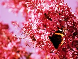resting on pink. by Claudiaromano