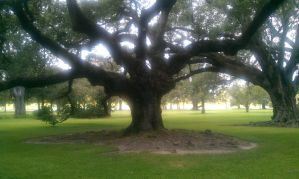 More Live Oaks by LissieBull