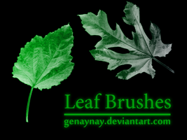 Leaf Photoshop Brushes by GENAYNAY