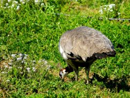 I Wanna See Your PeaHEN by KittyEatsSouls