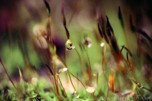 Natures Work V by Michaella-Designs