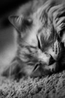 The Real Garfield by msteenphotographer