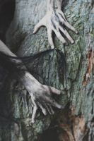 Wounded tree by MariaPetrova
