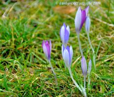 Shades Of February 51 by dandy-cARTastrophe