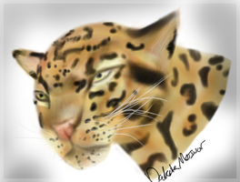 Leopard by NeonDefined