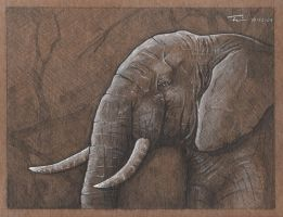 reWorth Elephant by TWKeller