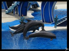 Sea World 8 by SPFan2
