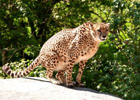 marwell 15 by mactac1701
