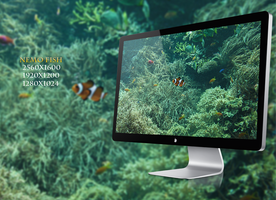 Nemo Fish wallpaper by NickchouBG