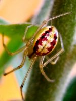 Orb Spider 0 by iriscup
