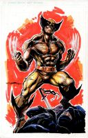 Wolverine brown by Cinar