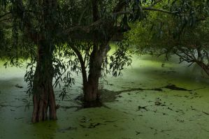 Mosquito Heaven - Cambodia by SantiBilly