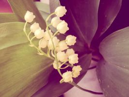 Lily of the valley - coloured by MadalinaGulerez