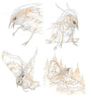 Harpy Moth sketches by Simkaye