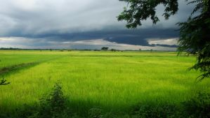 Cambodian Fields by xWaleedx