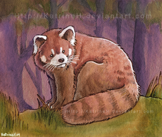 Red panda by KatrineH