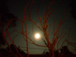 A Full Moon In The Red Tree-03 by hummingbird88
