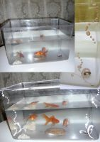 aquarium make over by Oussika