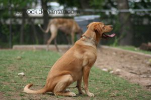 golden lab 3 by jettstock